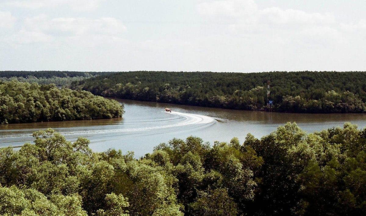 Hình ảnh rừng ngập mặn Vàm Sát - KHỞI CÔNG XÂY CẦU CẦN GIỜ MỚI NHẤT