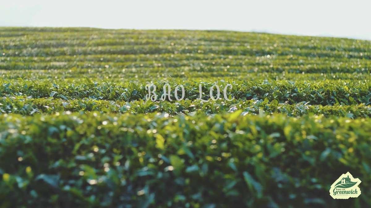 bao loc greenwich 2020 - BẢO LỘC GREENWICH